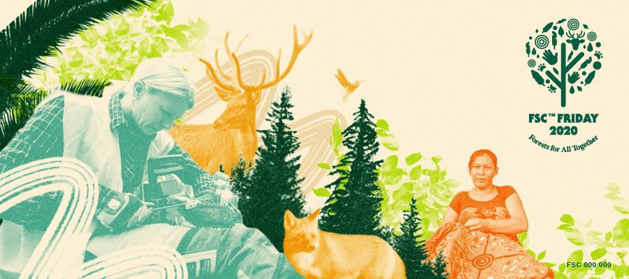 FSC Friday Indian forest stewardship commision dorset