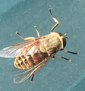 The horsefly that changed RPM